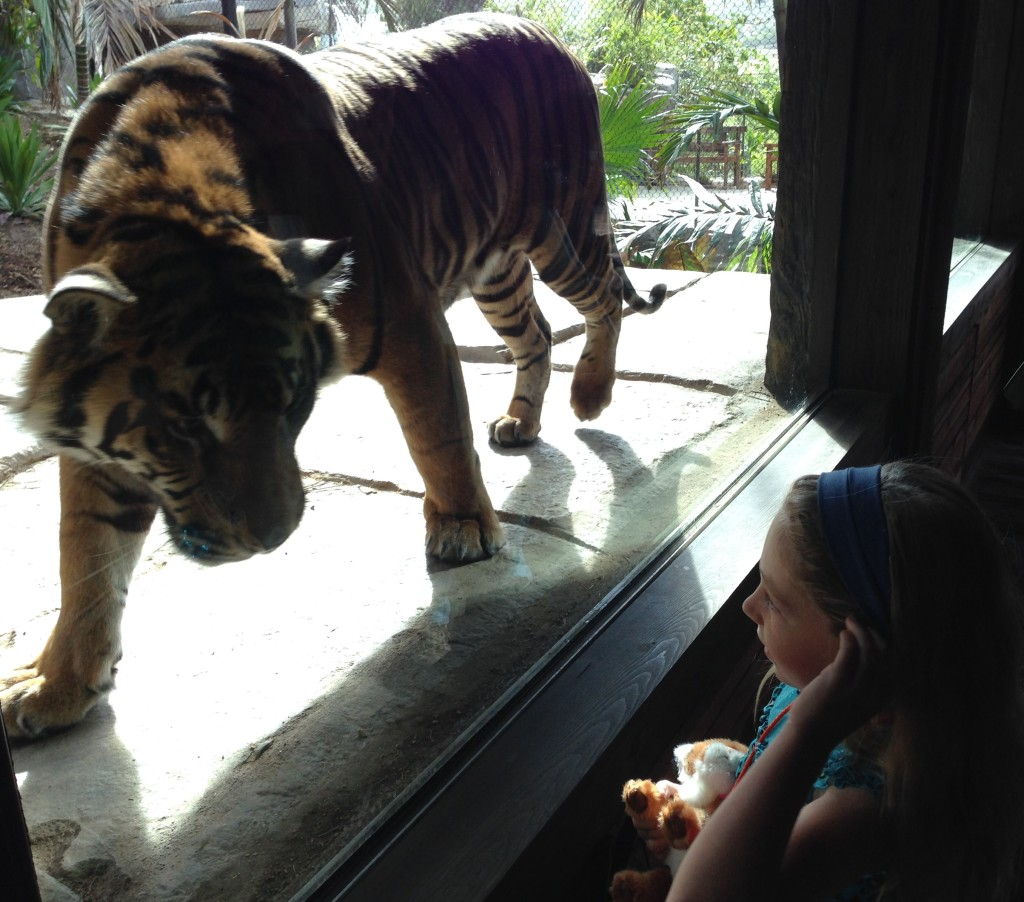 Tiger, checking out the appetizers (my niece Olivia)