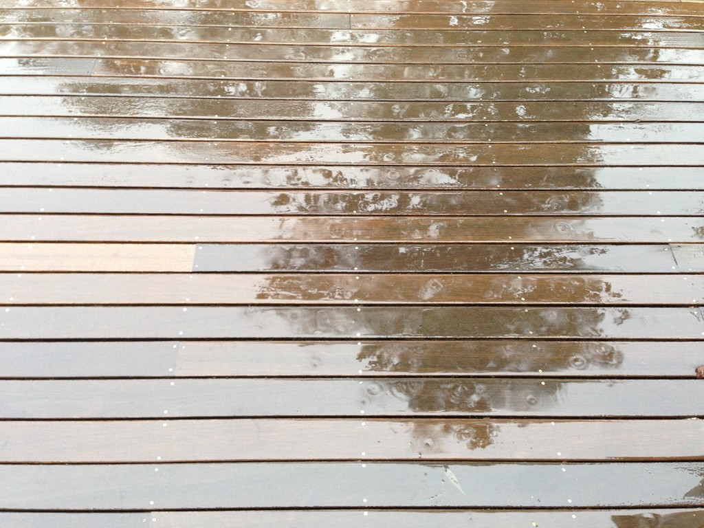 Trees reflecting in the wet deck as the rain began to taper off