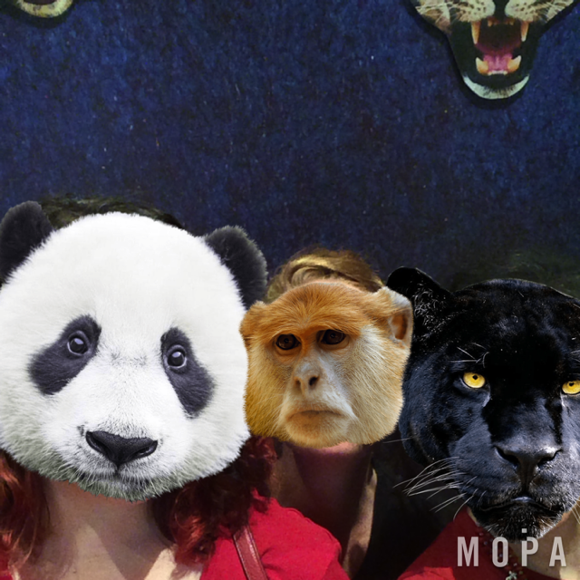 Now as Panda, Monkey, and Panther